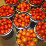 Picked Tomatoes